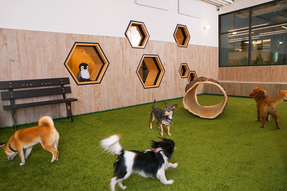 Indoor dog park